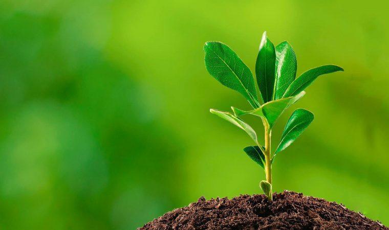 A importância da Lei Geral do Licenciamento Ambiental