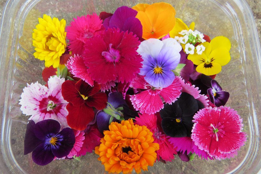 Flores comestíveis cultivadas pela jardinista Gisela Koloda. Ela venderá diferentes tipos de flores frescas para consumo imediato. Foto: Gisela Koloda/Divulgação
